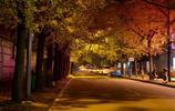 秋天的色彩,成都銀杏路賞銀杏之旅