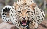 動物圖集:溫馨帥氣的動物世界