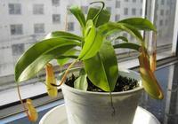 """這7種""""瀑布""""植物,吊的越高長的越旺,比綠蘿好看多了"""