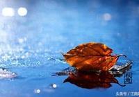 秋意趨涼,思念漸濃