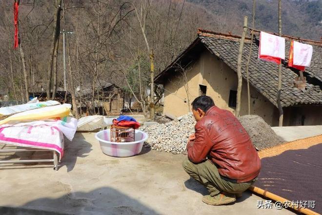 秦嶺略陽鄧家營,主人家有著閒情逸致,農活玩鳥兩不誤