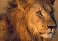 孤獨的雄獅卡里