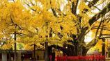 中國十大千年古樹,知道三種以上的人不多