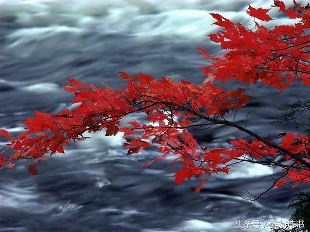 詩歌《秋來紅妝》文/倪莉