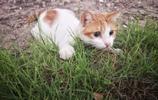 可愛的貓咪華為P20pro拍攝,告訴你華為P20系列值不值得購買