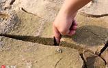 贛江南昌段水位下降土地龜裂 裂紋深達五釐米、小魚變魚乾