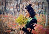 看風景攝影:秋日中,我最美麗,紅葉黃花最當配