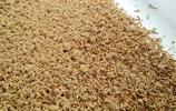 黃粉蟲為何市場前景廣,會不會成為農業發展的一個亮點