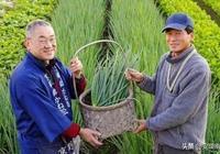中國農業和日本農業差距到底有多大?