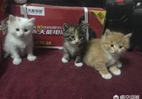 流浪貓來家裡五天了,生了六隻小奶貓,小奶貓長大後該何去何從呢?你怎麼看?