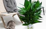 幾款懶人最愛養的花卉盆栽,隨便管理一下就爆盆了,栽在家裡超美
