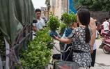 餘敏不遠千里從四川到全國十幾個省賣花受盡千辛萬苦,只為40畝茉莉花能純賺30萬元
