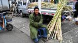 小夥收秋耽誤了賣甜高粱,損失兩三萬,收回家的糧食都不值這些錢