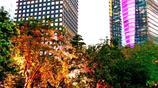 國家級中央商務區中的小氧吧,珠江新城這樣的夜色很適合閒逛