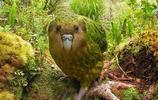 寵物圖集-萌寵 鸚鵡