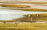 我在香格里拉,我在伊拉草原,戀上了天空中自由的飛鳥