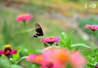 李煜的詞《蝶戀花》在講什麼?