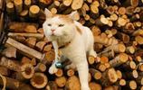 貓叔圖集:籃子貓竟然也談戀愛了,好溫馨的場面
