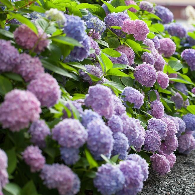 """老祖宗叮囑:這三種盆栽被稱為""""美麗的殺手"""",千萬不要養在家裡"""