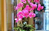 這8種名貴花卉,越是隨便澆水,越容易長到爆盆,不種太虧了!