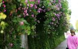 立夏時節 薔薇花開