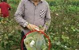 朱之文微博晒摘棉花照片,卻因為裝棉花的袋子引起了網友們的罵戰