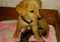 狗狗總是偷偷跑到鄰居家,女主看到它身邊的小奶狗瞬間感動落淚!