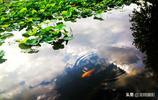 2019年6月份20張照片告訴你貴州省安順市的這些風景是如此之美