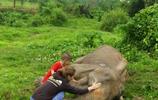大象淪為坐騎60多年,獲救後不久,臉帶微笑地離去