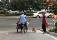 拾荒老人救了流浪狗,沒想到流浪狗這樣報答他