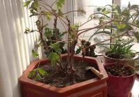 8個綠植養植小技巧,教你養出又健康又漂亮的綠植