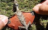 印尼婆羅洲會滑行蜥蜴 完美的偽裝成一片葉子