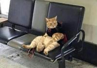粗心主人把貓咪落在了車站,當回來找到貓咪後笑噴了