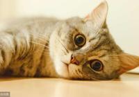 日本一男子憤怒的控訴道:遊客一直給我家貓拍照,結果貓咪失明瞭