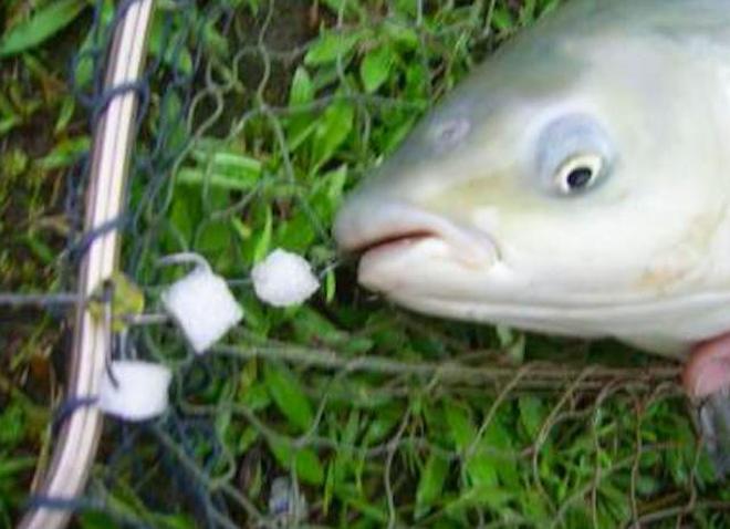 """浙江新出一種魚鉤:叫""""粘魚鉤,丟進河中,新手也能分鐘上大魚"""