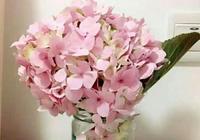 繡球、玫瑰、洋桔梗、洋牡丹、向日葵幾款鮮花,怎樣養能延長花期?