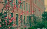 雨中迎春花