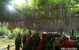 如何在擠滿兩千人的嘉定紫藤園裡拍出一個人的大片?