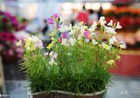 這些花,好看又好養,一年時間,1盆輕鬆變超多盆!