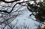 釜山遊記 影島太宗臺遊園地遊玩 一個山景、海景皆美的地方