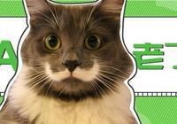 當貓咪老了,可能會有這8種變化,這時多給它一些關愛!