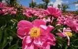 吉林柳河拍的鮮花