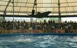 我的旅遊 泰國普吉島尼莫海豚館旅遊遊記 對保護動物有更深的意識