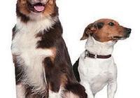 正確認識和預防狂犬病