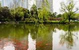 上海延中綠地花紅柳綠 一派好春光