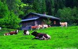 養牛:養牛價格上漲,為何養殖疲軟?