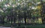 長沙美景之長沙大學、月湖公園