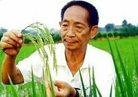 我國的水稻專家袁隆平研究的雜交水稻是不是轉基因水稻?