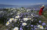"""這裡被稱為""""大西洋的最後一滴眼淚""""夏日迎來了花海的盛開"""