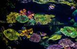 泰國曼谷海底世界:曼谷暹羅海洋世界,曼谷水族館不一樣的玩法